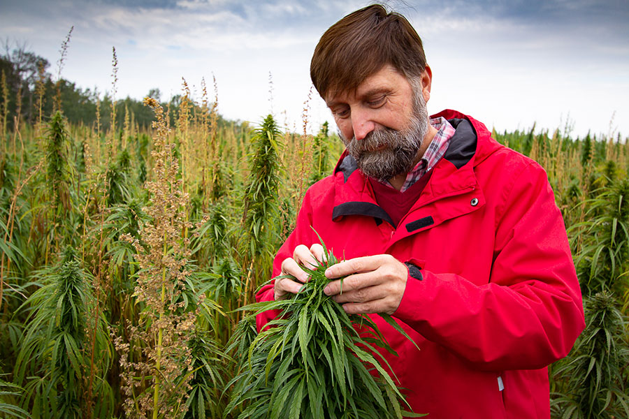 How Alberta is poised to become a hub of the hemp industry
