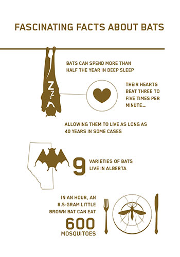 facts about bats in alberta