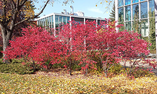 burning bush nait campus