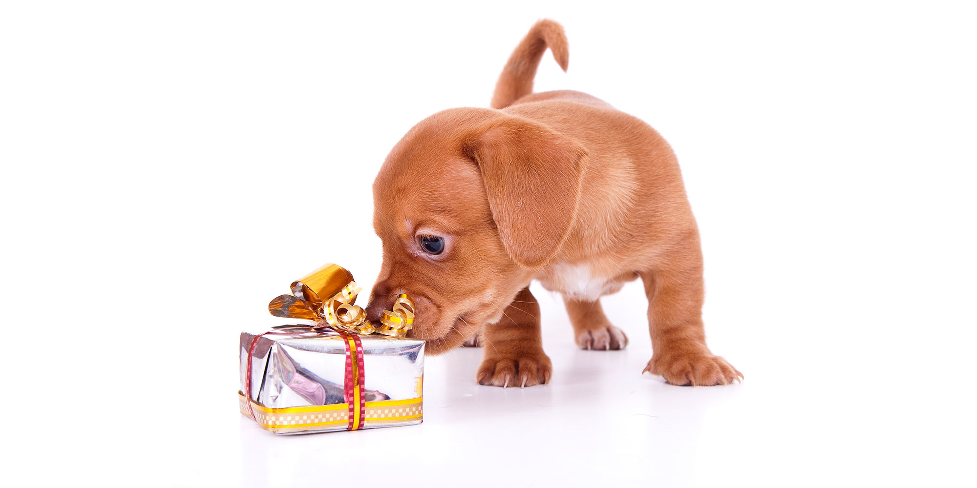 Techlife Today Christmas Gift Ideas For Your Dog