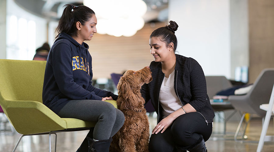 flynn, nait's animal assisted therapy dog and students
